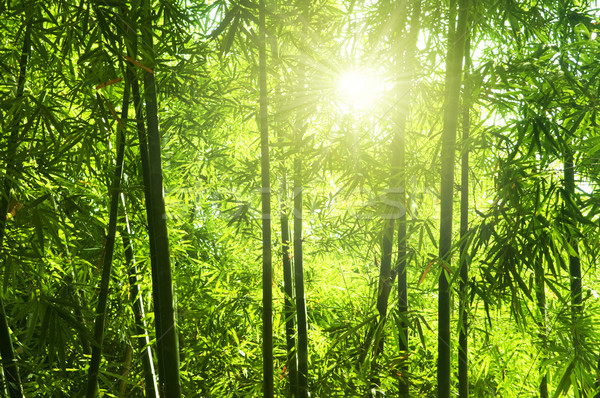 Bamboo forest. Stock photo © szefei