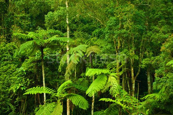 Tropical denso floresta paisagem fantástico manhã Foto stock © szefei
