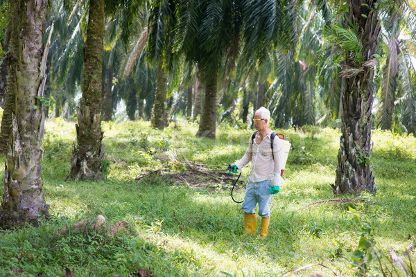 spraying herbicides at oil palm estate Stock photo © szefei