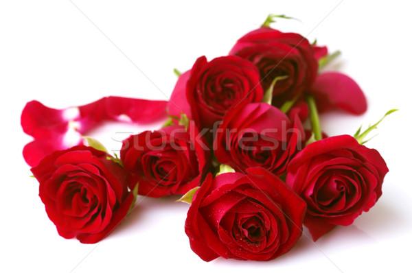 Roses Stock photo © szefei