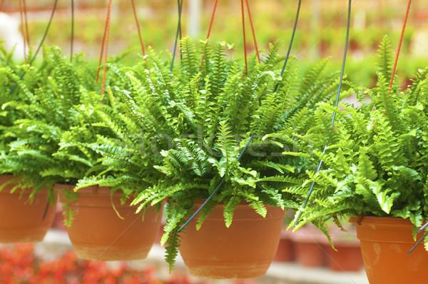 Szklarnia wiele roślin działalności domu Zdjęcia stock © szefei