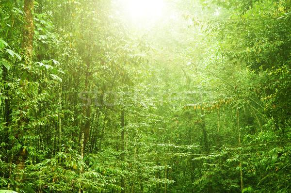 Beautiful tropical forest Stock photo © szefei