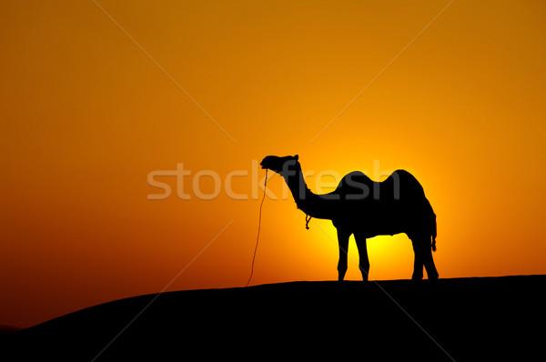 Foto stock: Deserto · paisagem · camelo · pôr · do · sol · natureza · fundo