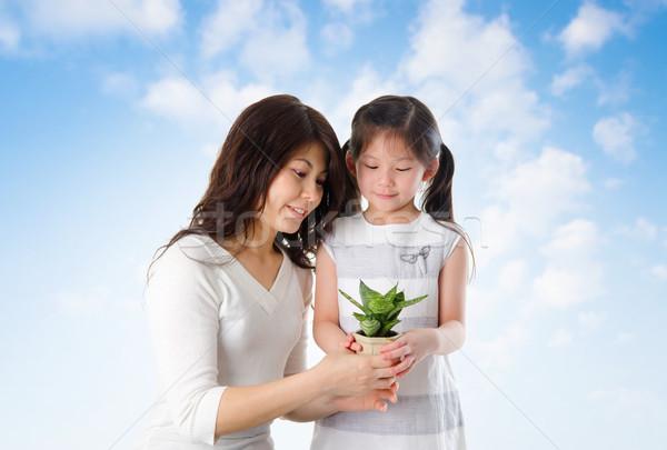 Asian family taking care plant Stock photo © szefei