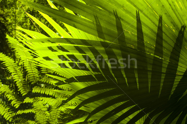 Tropical forest. Stock photo © szefei