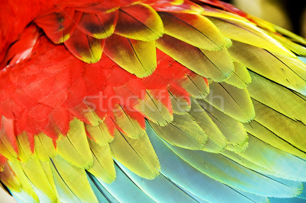 colourful wings Stock photo © szefei