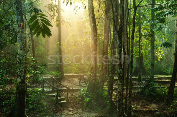 Beautiful tropical park Stock photo © szefei