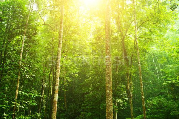 Trópusi esőerdő tájkép hihetetlen zöld erdő Stock fotó © szefei