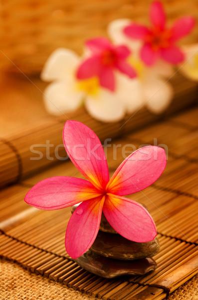 Tropicales spa flores bajo iluminación naturaleza Foto stock © szefei