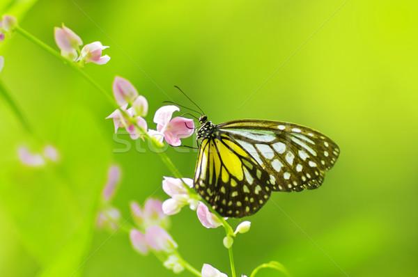 Mariposa amarillo vidrioso tigre flor Foto stock © szefei