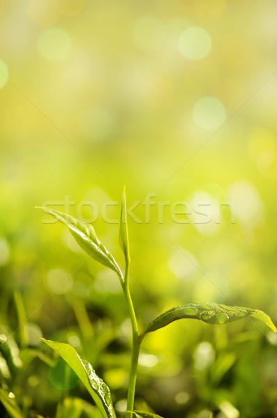 ストックフォト: 茶 · 葉 · ぼけ味 · 日光 · ツリー