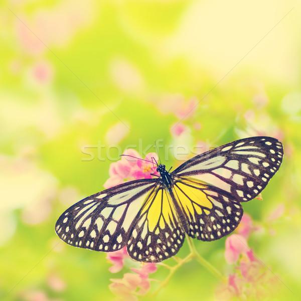 Borboleta flor amarelo vítreo tigre Foto stock © szefei