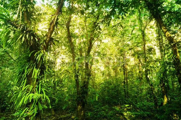 Fantastic tropical green forest  Stock photo © szefei