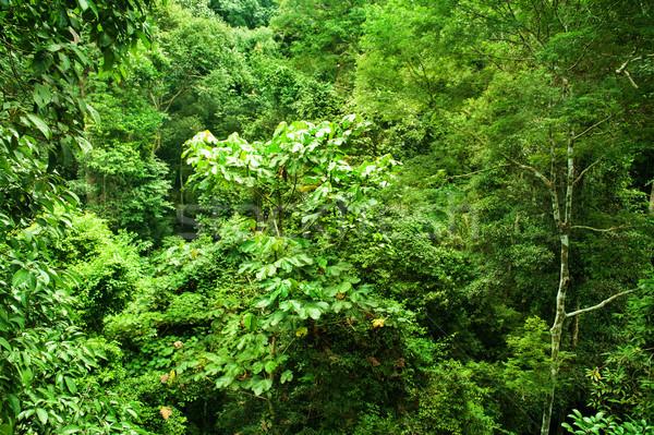 Tropical dense forest  Stock photo © szefei