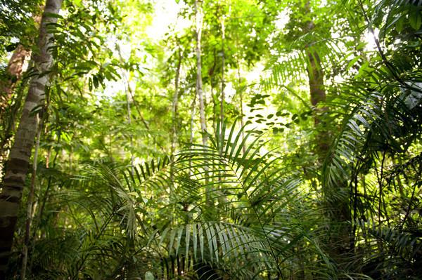 леса пейзаж Малайзия зеленый джунгли дерево Сток-фото © szefei