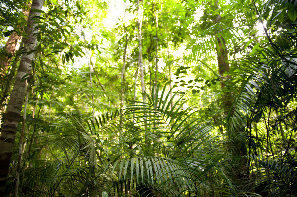 Selva paisaje Malasia verde selva árbol Foto stock © szefei