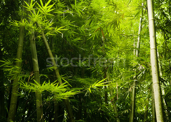 Asian bambù foresta mattina luce del sole albero Foto d'archivio © szefei