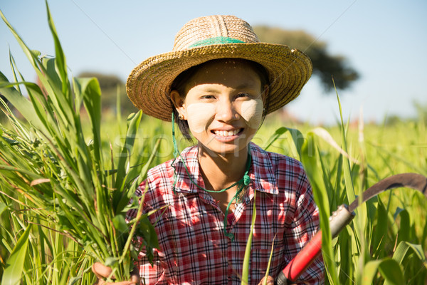Traditional young Asian Burmese female farmer Stock photo © szefei