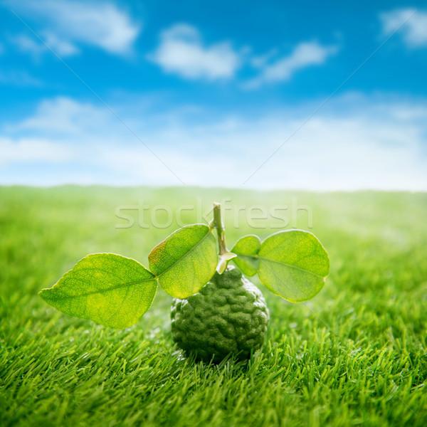 Organic kaffir lime on green lawn with blue sky Stock photo © szefei