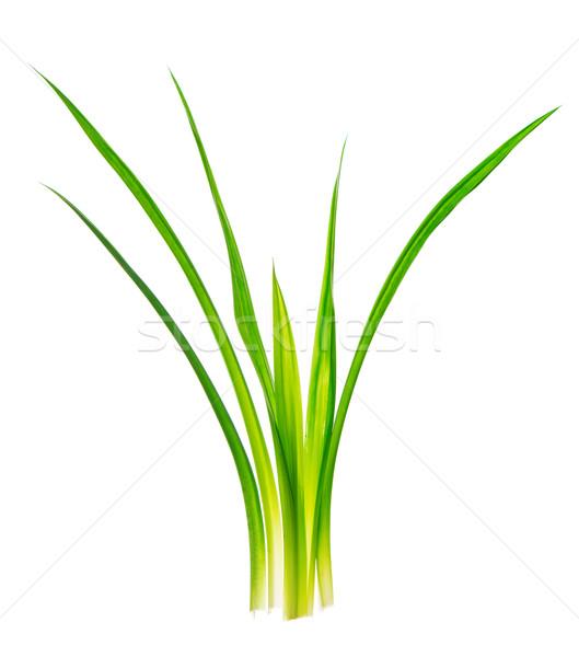 Duftenden Blätter Anlage frischen isoliert weiß Stock foto © szefei