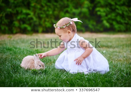 Cute bébé animal lapin lapin gris Photo stock © thisboy