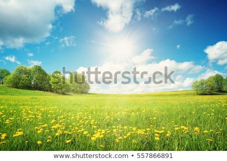 Voorjaar landschap mooie groene heuvels paarden Stockfoto © remik44992