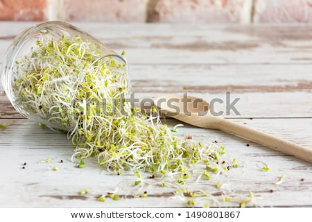 Stock photo: Sprouts