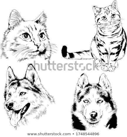 Chat chien croquis vecteur ami logo Photo stock © Hermione