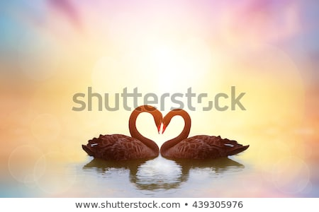 Stock photo: couple in love back light silhouette at lake