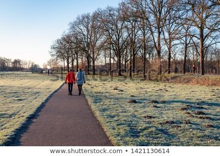 city park in early winter stock photo © zakaz