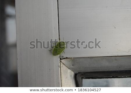 zöld · természet · kert · szépség · rovar · biológia - stock fotó © sweetcrisis