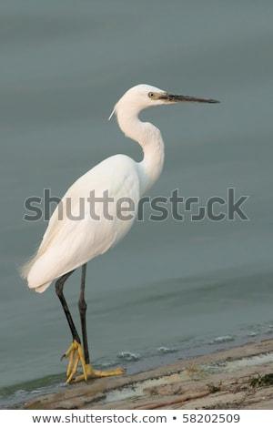 мало небе два белый птиц красоту Сток-фото © gant