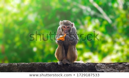 monkey eating stock photo © witthaya