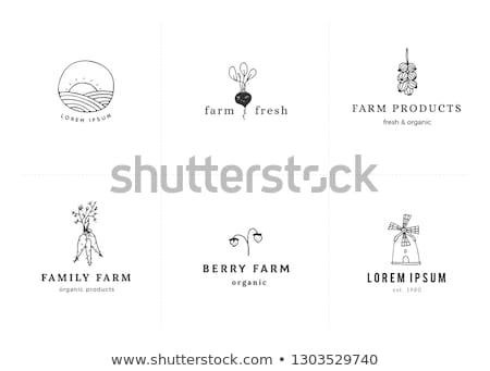 agricultores · mercado · raiz · legumes · venda · comida - foto stock © erbephoto