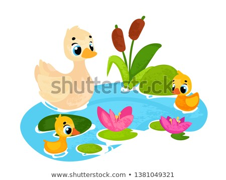 Ducklings Swimming on a Pond Stock photo © brianguest