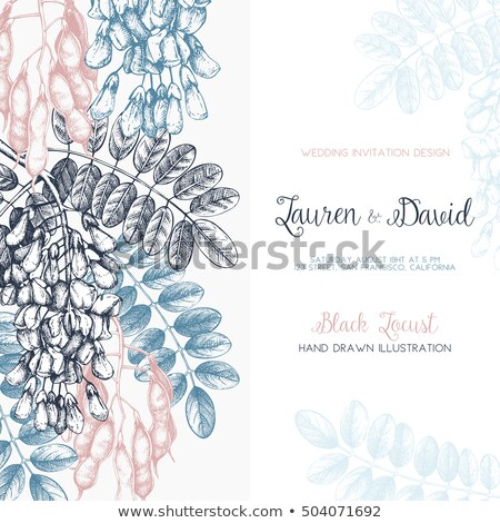 tropical locust flower stock photo © ruzanna