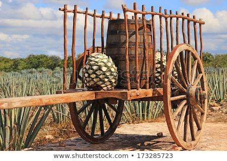 Starych mexican koszyka ziemi kolor Błękitne niebo Zdjęcia stock © emattil