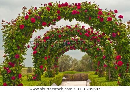Verde vinícola jardim uvas céu Foto stock © neirfy