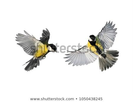 Foto stock: Funny · vuelo · volar · vector · Cartoon · diferente