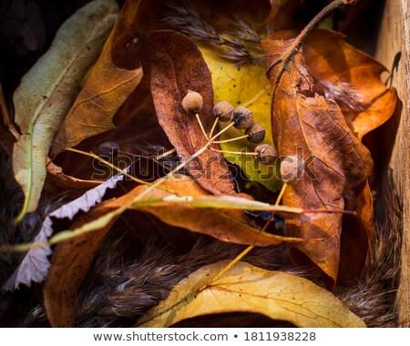 Hárs magok fa föld szint kilátás Stock fotó © TheFull360