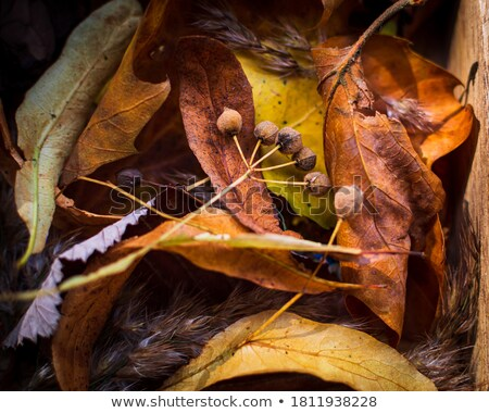 Zaden boom grond niveau Stockfoto © TheFull360