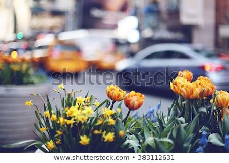 Centre-ville fleurs printemps ciel ville rue Photo stock © inarts