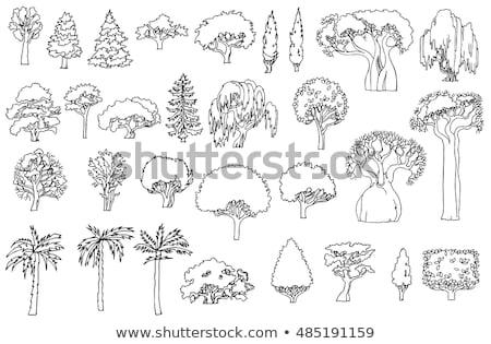 Willow tree lines Stock photo © hraska