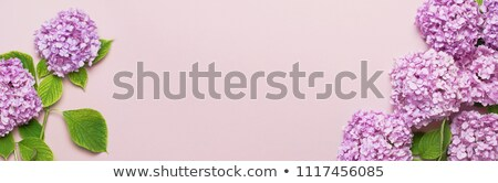 Augusztus virágok absztrakt keverék természet háttér Stock fotó © vavlt