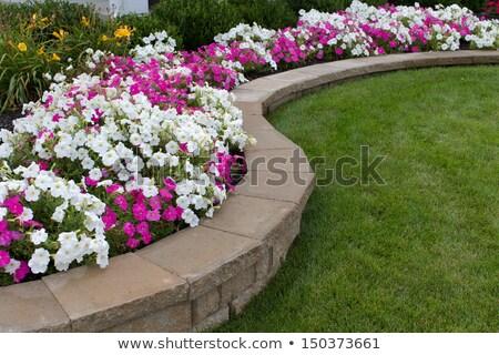 Клумба розовый белый кирпичных цветы весны Сток-фото © ozgur