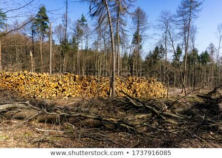 erdő · vág · boglya · égbolt · természet · zöld - stock fotó © tainasohlman
