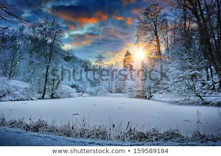 beautiful sunrise over the winter forest stock photo © taviphoto
