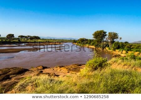 Stok fotoğraf: Manzara · rezerv · Kenya · gökyüzü · ağaçlar