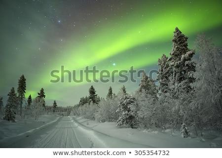 holdfény · fák · éjszaka · fa · sziluett · ötlet - stock fotó © aetb