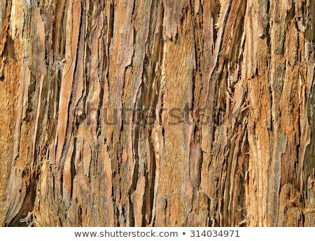 Sequoila boom schors textuur bruin hout Stockfoto © stocker